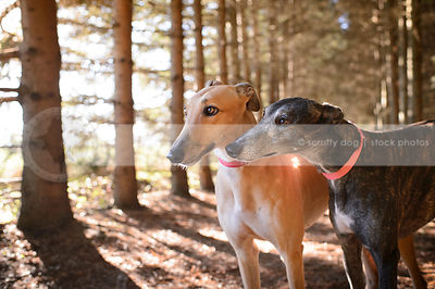 two dogs together in forest showing love relationship
