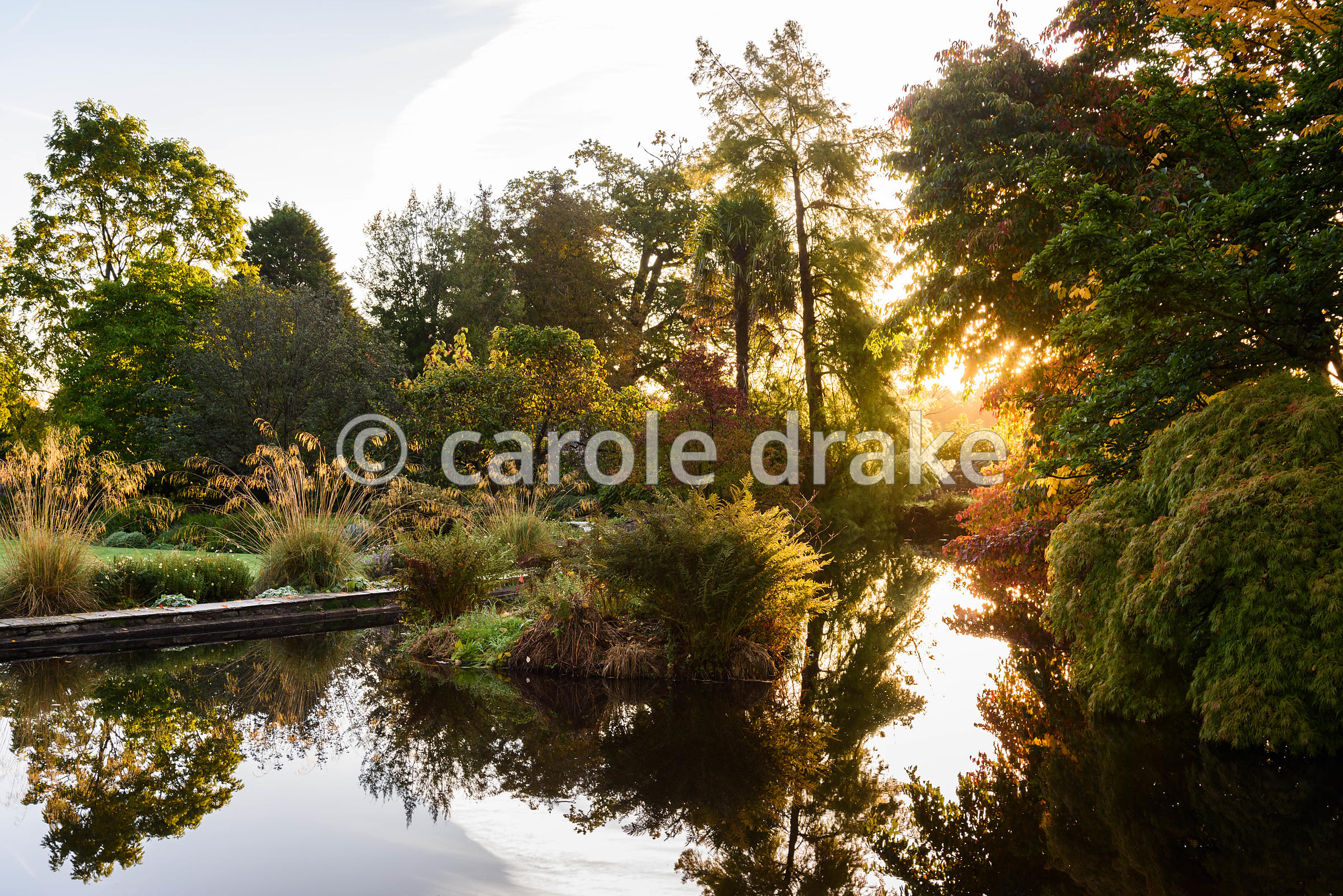 The Lower Pond surrounded by trees and shrubs including Acer palmatum dissectum, magnolias and moisture loving ferns plus a border dotted with Stipa gigantea at Llanover Gardens, Monmouthshire in September