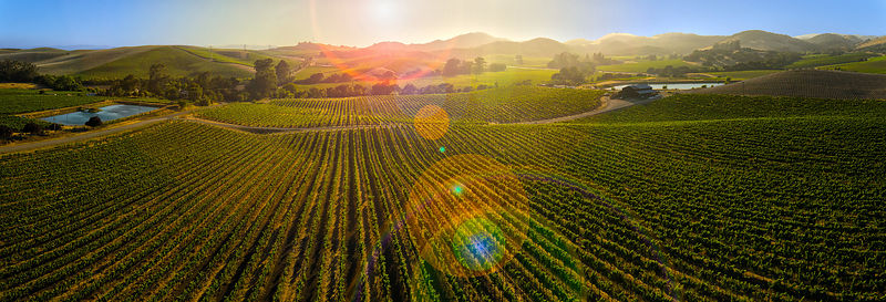 Surreal Napa Valley vineyard landscape aerial panorama