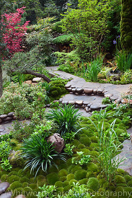A path edged with decorative rounded pebbles and moss mounds with Pachysandra terminalis in the Japanese garden Satoyama Life...