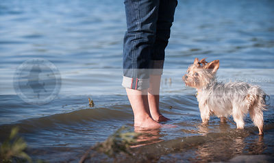 expressive little dog standing in lake shore water with owner