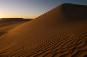 dune, the Great Sand Sea, Western desert, near Siwa oasis, Egypt