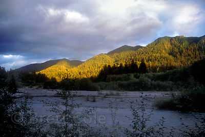 Golden light at dusk over the Hoh River, Olympic National Park, Washington