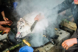 Using Boiling Water to Remove Hair From Killed Pig
