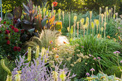 Sunken garden is a mass of colourful flowers in late summer, including kniphofias, cannas, dahlias, eucomis and grasses. Crab...