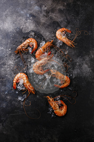 Boiled pink Tiger Prawn Shrimp on ice on black background copy space