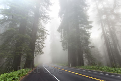 Morning fog near Del Norte Coast Redwoods State Park, California
