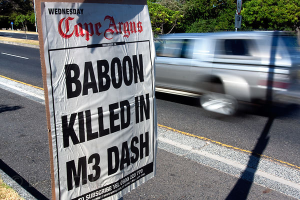 Newspaper placard with headline about a baboon killed in traffic, Cape Town, South Africa