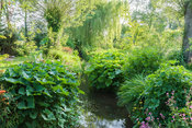 Water channel running through the garden edged with ligularias, primulas and darmera, as well as willows. Westonbury Mill Wat...