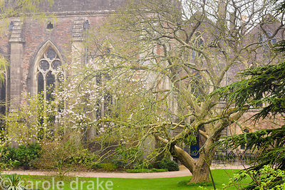 Shrubs and trees surround the ruins of the Great Hall in the South Garden at the Bishop's Palace Garden, Wells, Somerset in A...