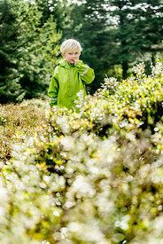 Little Danish boy picking berries in the woods