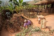 Family working in thier yard watering plants and weeding garden. Rwanda.