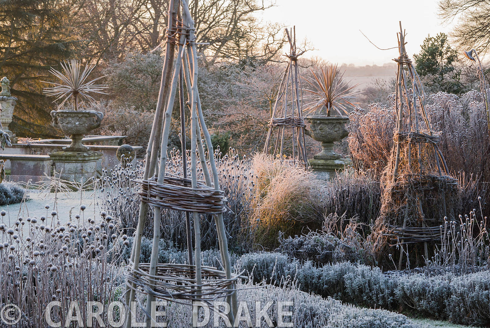 Frosty remains of herbaceous plants in the Rainbow Garden with cordylines in urns beside the terrace beyond. Kingston Maurwar...