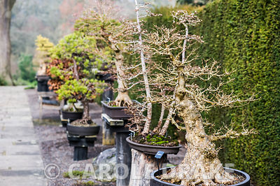 Bonsai walk.