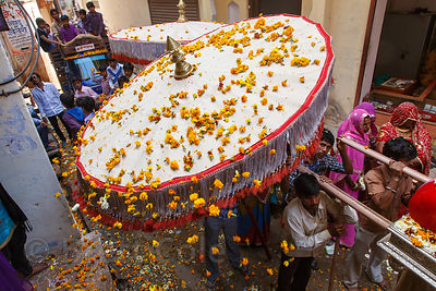 Marigold flowers fall from a large umbrella during a parade on Mahashivaratri (Shiva's birthday), Pushkar, Rajasthan, India