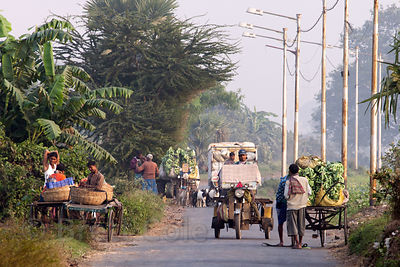Three-wheeled motorcycle carts transport vegetables from farms on rural roads around Dhapa, in the East Kolkata Wetlands, India.