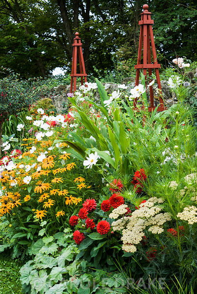 Decorative border punctuated by red wooden obelisks features brightly coloured dahlias, Rudbeckia 'Marmalade', Achillea 'Terr...