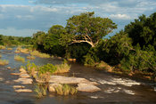 Sabie river, Kruger National Park, South Africa