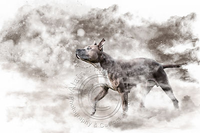 Art-Digital-Alain-Thimmesch-Chien-87