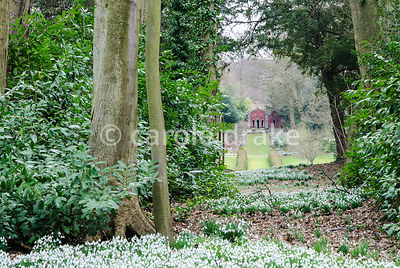 The Red House glimpsed through the wood carpeted with naturalized snowdrops. Painswick Rococo Garden, Painswick, Glos, UK