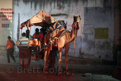 A group of Indian tourists go for a camel ride at the Pushkar Camel Fair, Pushkar, Rajasthan, India