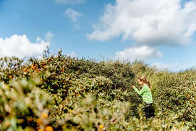 Girl picking sea buckthorn in Thy, Denmark 2