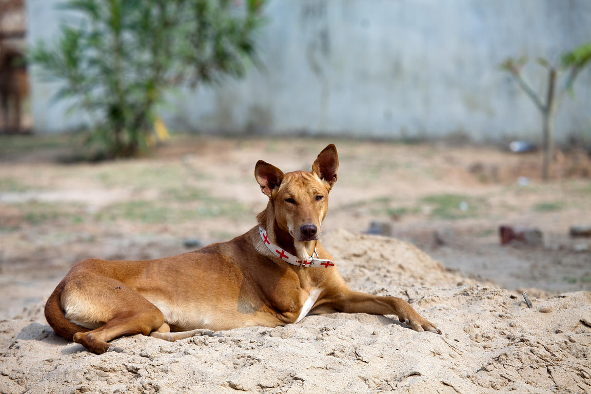 A dog at the Tree of Life for Animals rescue center in Pushkar, India