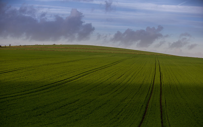 Greeen_Fields_LittleHampton_2015_030