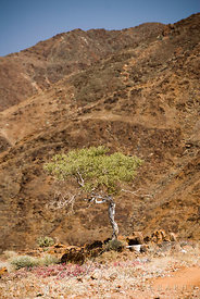 Lone tree in a dry valley below high mountain slopes