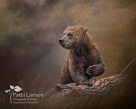 Coastal Brown Bear on the Look Out