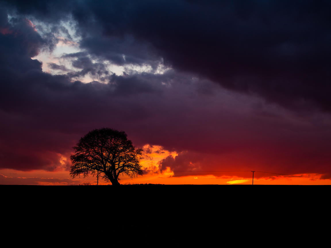 Sunset_Tree_2013_0002