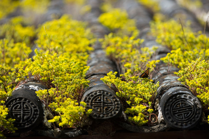 Roof tiles and flowers