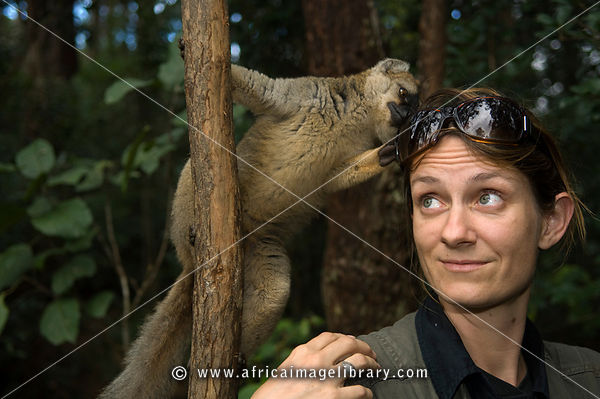 Tourist with a Brown lemur, Eulemur fulvus, Vakona Forest Reserve, Andasibe Mantadia National Park, Madagascar
