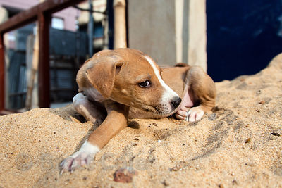 A puppy atop a sand pile at a construction site in Lake Gardens, Kolkata, India.