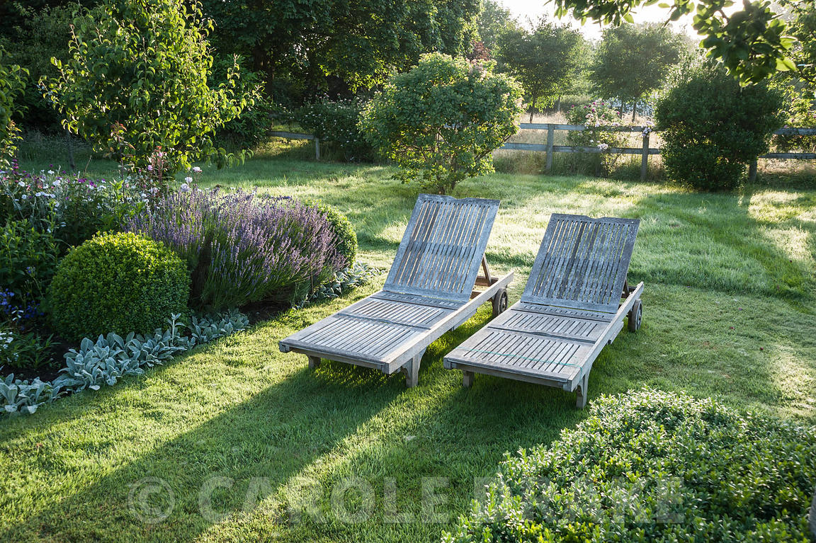 A pair of wooden sun loungers besdie a bed of lavender, clipped box, Stachys byzantina 'Silver Carpet', white lychnis and ros...