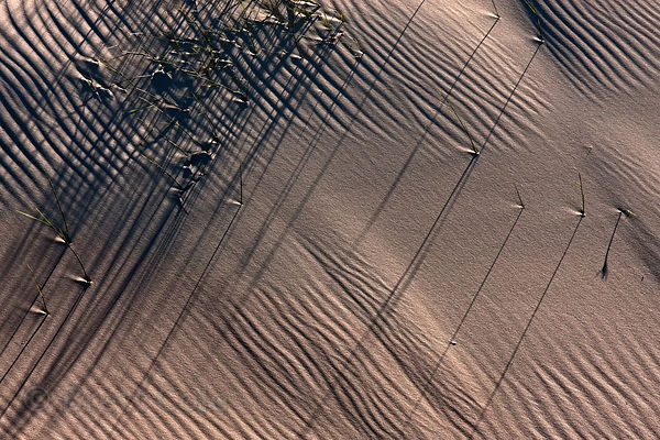 Patterns on a sand dune at Olifantsbos, Cape Peninsula, South Africa