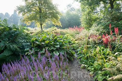 Bog garden with hostas, lobelias and astilbes. Forde Abbey, nr Chard, Dorset, UK