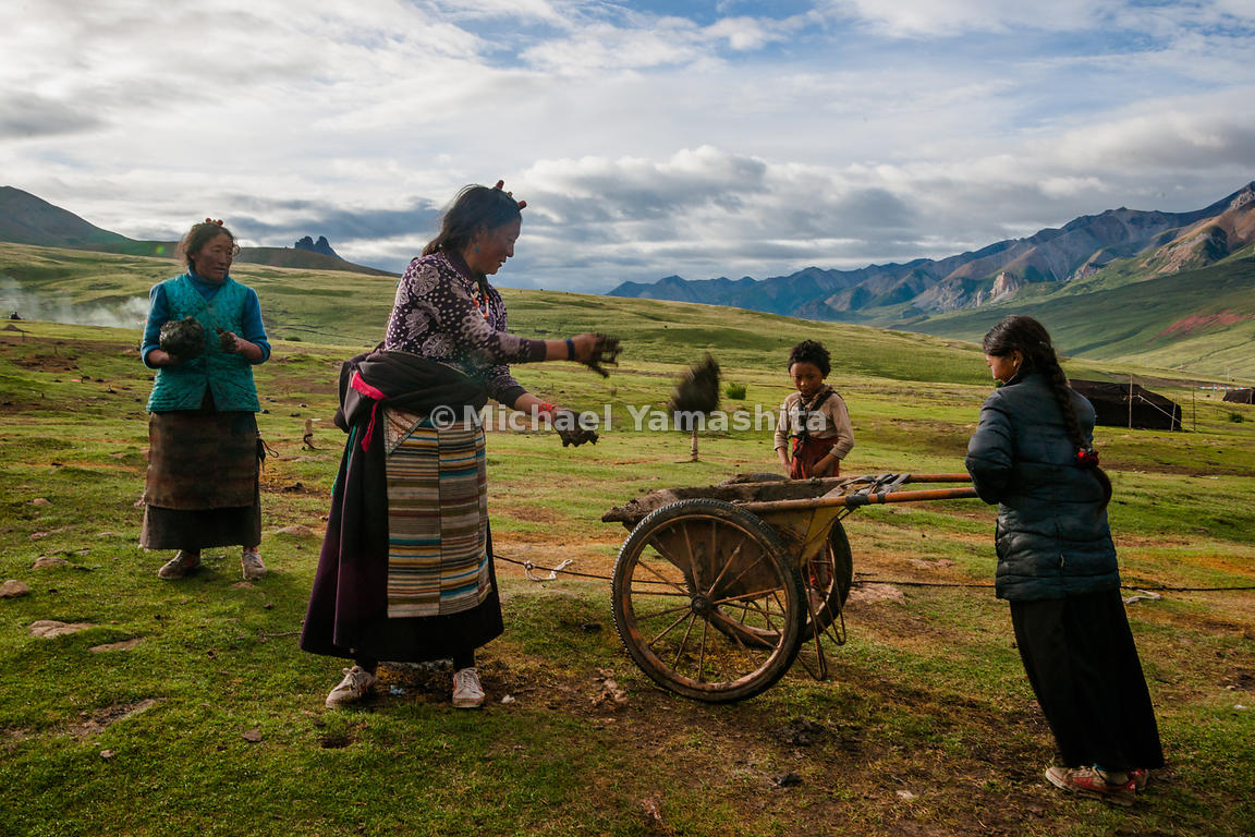 On virtually treeless Tibetan Plateau, yak dung is burned as fuel for heating and cooking. The job of dung collection falls t...