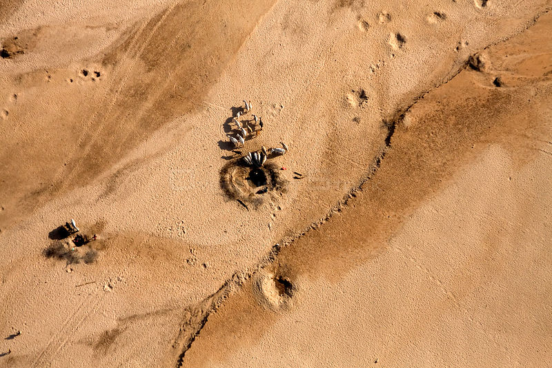 Samburu livestock, as seen from the air, illegally entering Samburu National Park searching for food and water. Holes are mad...