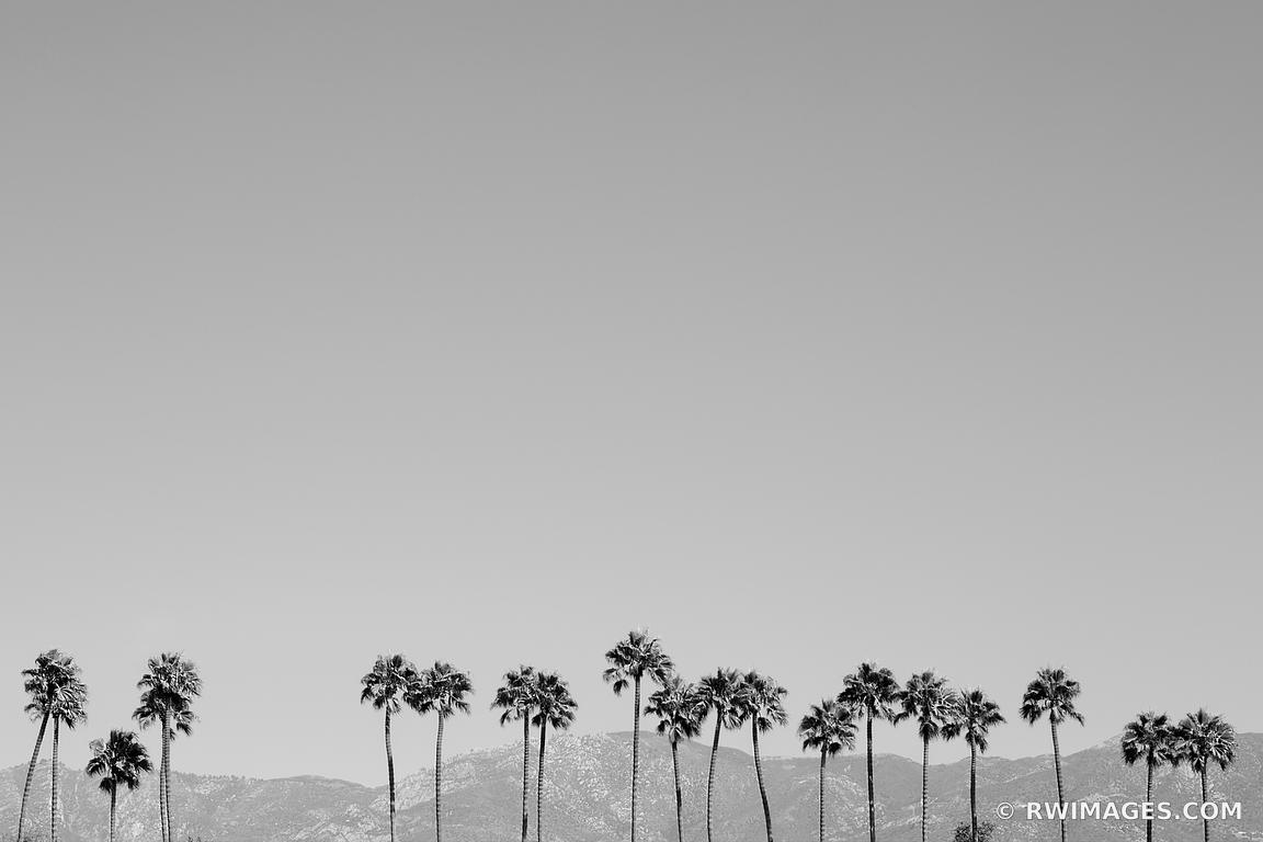 PALM TREES SANTA BARBARA CALIFORNIA BLACK AND WHITE