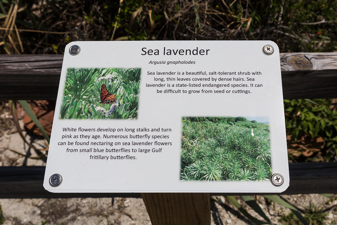 Sea Lavender Sign in Bahia Honda State Park