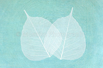 white leaves, elegant greeting card
