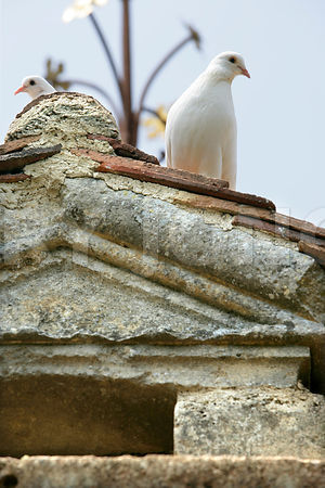 photo du pigeonnier