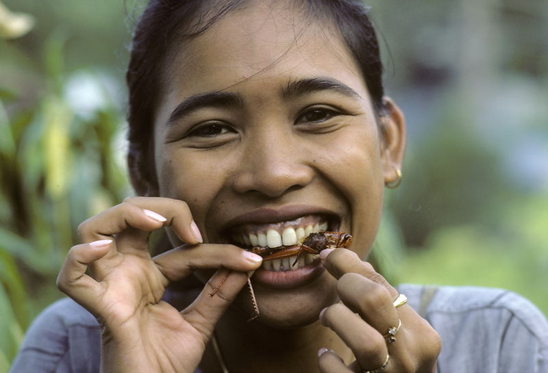 A Thai girl eating fried grasshopper..A Thai girl bites into a crispy tahataen, as grasshoppers are called. Fried grasshopper...