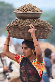 A woman collects camel dung for fire fuel in Pushkar, Rajasthan, India