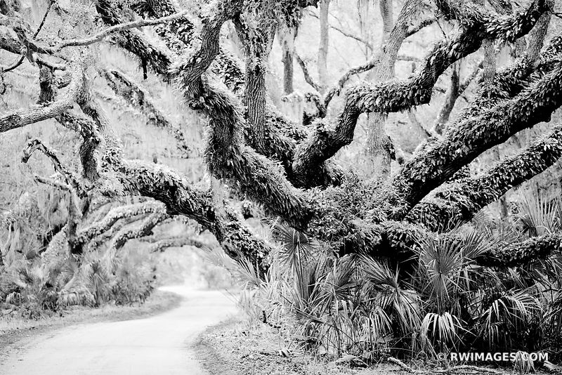 MAIN ROAD CUMBERLAND ISLAND NATIONAL SEASHORE GEORGIA