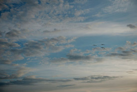 Seagulls in the sky #3