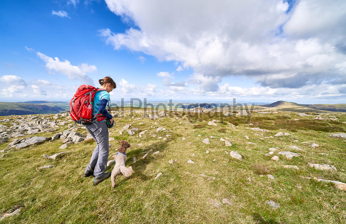 A female hiker giving their dog a treat after walking off the summit of Great Borne, Loweswater Fell. The English Lake Distri...