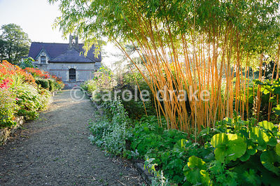 Gravel paths run between the stone edged beds past a clump of golden stemmed bamboo,  Phyllostachys aureosulcata f. aureocaulis.