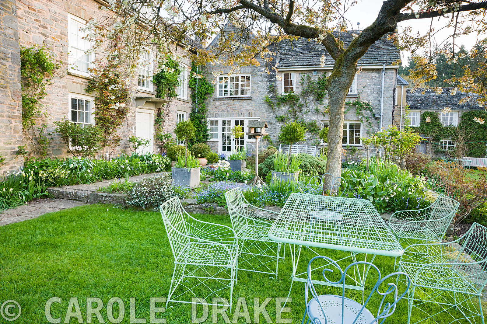 Wirework table and chairs on grass beside the terrace with cherry tree spreading overhead. Brilley Court Farm, Whitney-on-Wye...